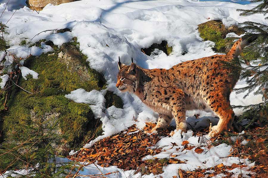 Šumava mapa, Zdroj: mapy.cz