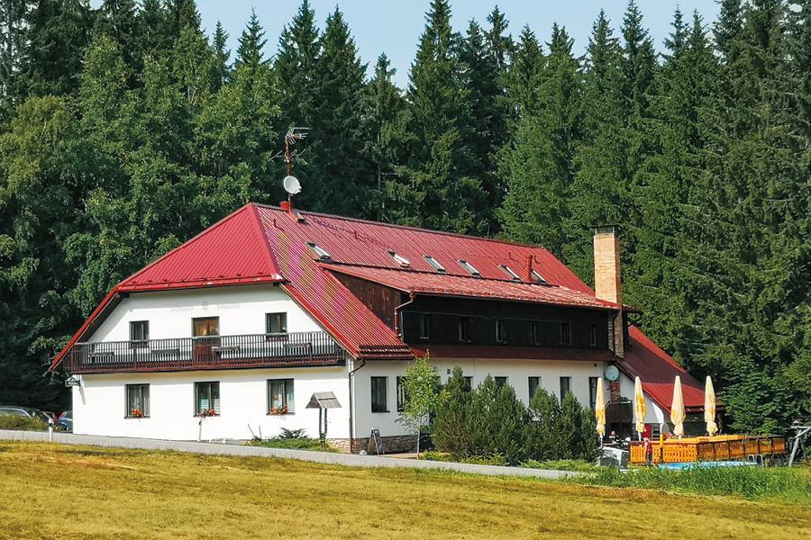 Lýkožrout smrkový (Ips typographus)